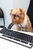 Διευθυντής σκυλιών Στοκ Εικόνες