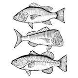 Διευκρινισμένα ψάρια Στοκ εικόνες με δικαίωμα ελεύθερης χρήσης