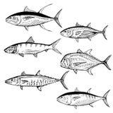 Διευκρινισμένα ψάρια Στοκ φωτογραφίες με δικαίωμα ελεύθερης χρήσης