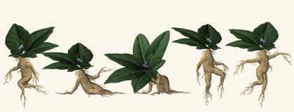 διευκρινισμένο φυτό που & απεικόνιση αποθεμάτων
