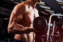 Δικέφαλοι μυ'ες αλτήρων workout Στοκ φωτογραφία με δικαίωμα ελεύθερης χρήσης