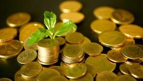Διοικητική αποδοτικότητα Χρυσός σωρός νομισμάτων και πράσινο φύλλο στο μαύρο υπόβαθρο Χρόνος για την επιτυχία της επιχείρησης χρη απόθεμα βίντεο