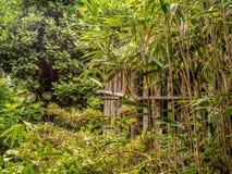 Διορατικότητα στη βαθιά ζούγκλα με την καλύβα στοκ φωτογραφίες με δικαίωμα ελεύθερης χρήσης
