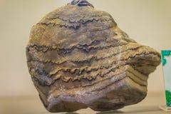 Διπλωμένος βράχος από να εξαγάγει για την εκπαίδευση Οι πτυχές στους βράχους ποικίλλουν στο Si Στοκ Φωτογραφία
