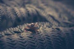 Διπλός-επισημασμένος βάτραχος δέντρων Rhacophorus bipunctatus, πορτοκαλής-webbed Στοκ Φωτογραφία