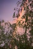 Διπλό ουράνιο τόξο πέρα από το δάσος Στοκ Εικόνα