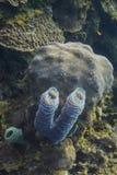 Διπλό σφουγγάρι βαρελιών Στοκ φωτογραφία με δικαίωμα ελεύθερης χρήσης