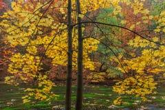 Διπλά δέντρα φθινοπώρου πέρα από τον ποταμό Στοκ Εικόνες