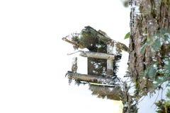 Διπλή έκθεση birdhouse Στοκ φωτογραφία με δικαίωμα ελεύθερης χρήσης