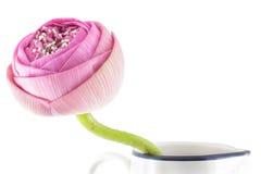 Διπλωμένο ρόδινο λουλούδι λωτού στο βάζο Στοκ φωτογραφίες με δικαίωμα ελεύθερης χρήσης