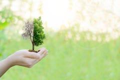 Διπλό έκθεσης οικολογίας κράτημα χεριών έννοιας ανθρώπινο Στοκ φωτογραφία με δικαίωμα ελεύθερης χρήσης
