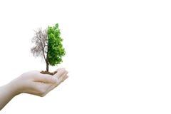 Διπλό έκθεσης οικολογίας κράτημα χεριών έννοιας ανθρώπινο Στοκ Εικόνες