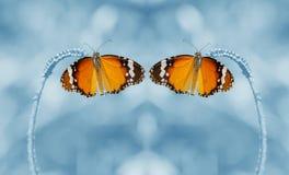 Διπλό υπόβαθρο πεταλούδων και θαμπάδων Στοκ φωτογραφία με δικαίωμα ελεύθερης χρήσης