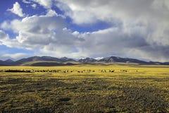 Διπλό Puruogangri θέρετρο λιμνών παγετώνων του Θιβέτ Στοκ εικόνες με δικαίωμα ελεύθερης χρήσης