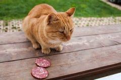 Διστάζοντας γάτα Στοκ εικόνα με δικαίωμα ελεύθερης χρήσης