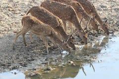 Διψασμένο καλοκαίρι στοκ εικόνες με δικαίωμα ελεύθερης χρήσης