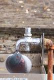 Διψασμένο περιστέρι βράχου Στοκ Φωτογραφίες