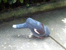 Διψασμένο πόσιμο νερό πουλιών στοκ φωτογραφία με δικαίωμα ελεύθερης χρήσης