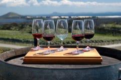 δοκιμάζοντας κρασί αμπελώνων Στοκ Εικόνες