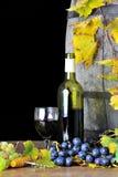 δοκιμάζοντας κρασί τέσσερα Στοκ φωτογραφία με δικαίωμα ελεύθερης χρήσης