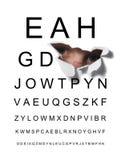 δοκιμή ματιών στοκ φωτογραφία με δικαίωμα ελεύθερης χρήσης