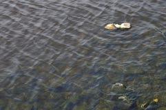 Δολοφονία στην όχθη ποταμού, παπούτσι απορριμμάτων που επιπλέει στην όχθη ποταμού Στοκ Φωτογραφίες