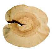 Δομή ενός δέντρου. στοκ φωτογραφία
