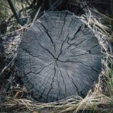 Δομή της παλαιάς κινηματογράφησης σε πρώτο πλάνο δέντρων Στοκ Εικόνες
