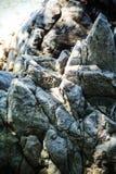Δομή του βράχου Στοκ Εικόνες