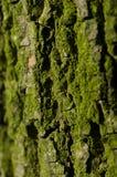 Δομή του φλοιού δέντρων που καλύπτεται με την πράσινη κινηματογράφηση σε πρώτο πλάνο λειχήνων Στοκ φωτογραφία με δικαίωμα ελεύθερης χρήσης