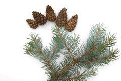Δομή Χριστουγέννων fir-tree, που απομονώνεται σε ένα άσπρο υπόβαθρο στοκ φωτογραφία με δικαίωμα ελεύθερης χρήσης
