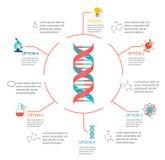 Δομή DNA infographic ελεύθερη απεικόνιση δικαιώματος
