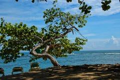 Δομινικανή Δημοκρατία, κόλπος Maimon, στριμμένο δέντρο στην ακτή, στοκ εικόνες
