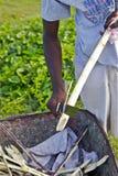 Δομινικανή Δημοκρατία πωλητών καλάμων Suger Στοκ φωτογραφία με δικαίωμα ελεύθερης χρήσης