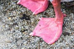 Δονούμενα ζωηρόχρωμα κολυμπώντας πόδια παπιών στην άμμο κοντά επάνω στοκ εικόνες με δικαίωμα ελεύθερης χρήσης