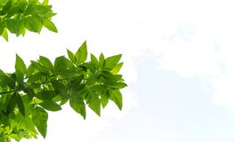 Δονούμενα φρέσκα πράσινα φύλλα που δημιουργούν ένα συμπαθητικό υπόβαθρο στοκ εικόνα