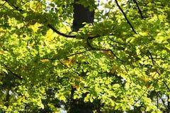 Δονούμενα φύλλα Στοκ Εικόνα