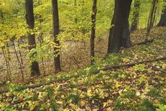 Δονούμενα χρώματα midwest στο δάσος στοκ φωτογραφίες