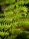 Δονούμενες πράσινες δασικές φτέρες στοκ φωτογραφίες με δικαίωμα ελεύθερης χρήσης
