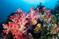 Δονούμενη κοραλλιογενής ύφαλος στις Φιλιππίνες στοκ φωτογραφίες