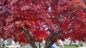 Δονούμενη πτώση επιδειχθε'ν χρώμα Ι αυτό το δέντρο Στοκ Εικόνες