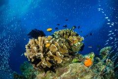 Δονούμενη υποβρύχια εθνική οδός στοκ εικόνες