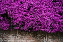 Δονούμενος και ζωηρόχρωμος τοίχος των λουλουδιών στο τούβλο στοκ φωτογραφία με δικαίωμα ελεύθερης χρήσης