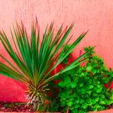 Δονούμενος κόκκινος τοίχος προαυλίων Λ με την τετραγωνική εικόνα φοινίκων στοκ φωτογραφία με δικαίωμα ελεύθερης χρήσης
