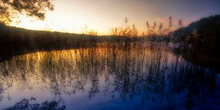 Δονούμενος ουρανός χρώματος πριν από την αυγή κοντά στη λίμνη και τους καλάμους στοκ φωτογραφίες