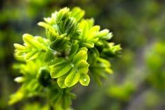 Δονούμενος πράσινος θάμνος Στοκ εικόνα με δικαίωμα ελεύθερης χρήσης