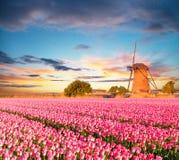 Δονούμενος τομέας τουλιπών με τον ολλανδικό ανεμόμυλο στοκ φωτογραφία με δικαίωμα ελεύθερης χρήσης