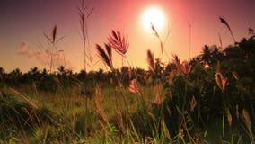 Δονούμενο ηλιοβασίλεμα πέρα από τον τομέα απόθεμα βίντεο