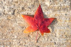 Δονούμενο κίτρινο και κόκκινο χρωματισμένο φθινόπωρο φύλλο σε ένα υπόβαθρο πετρών στοκ εικόνα με δικαίωμα ελεύθερης χρήσης