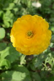 Δονούμενο και όμορφο κίτρινο λουλούδι Στοκ φωτογραφία με δικαίωμα ελεύθερης χρήσης